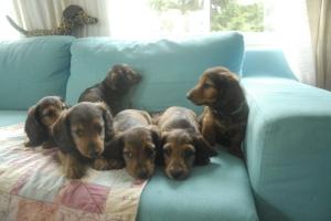 Pikkutytöt sohvalaa