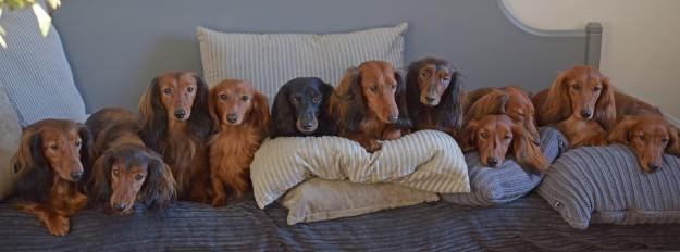 sohva ryhmä