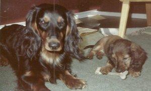 Donu ja Essi vuosi 1980