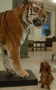 Kerttu ja tiikeri